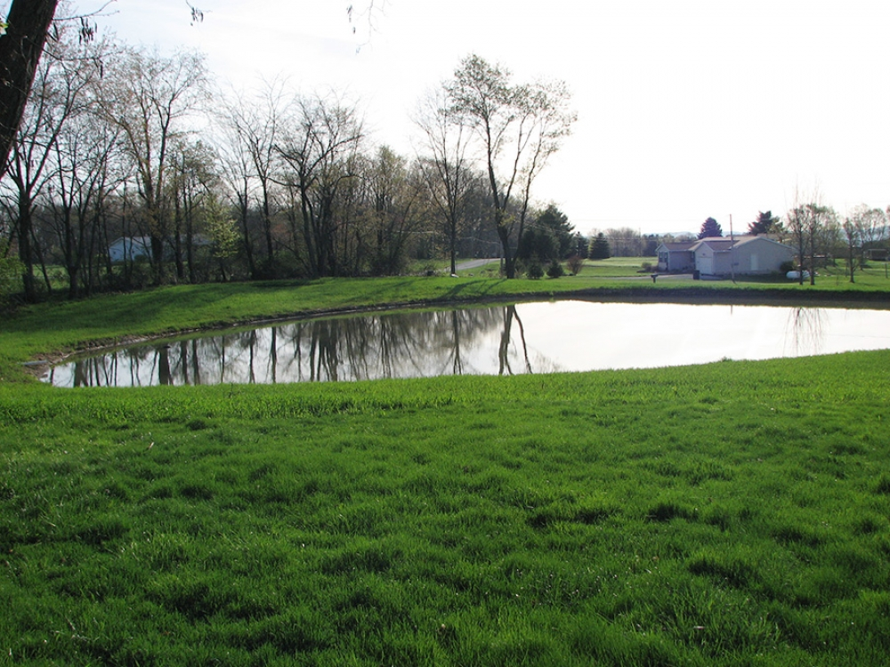 completed pond with grass cover